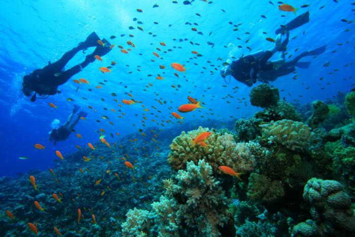 Dubai Scuba Diving 1