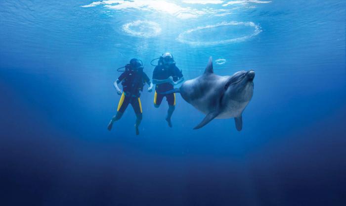 Scuba Diving Dubai 2